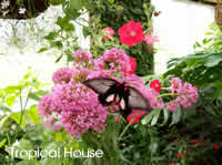 The Tropical House at the Straffan Butterfly Farm